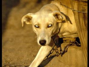 http://health.kompas.com/read/2009/04/25/13305398/Raperda.Bisa.Kurangi.Fobia.Anjing