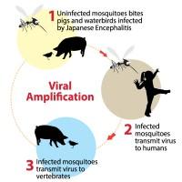 Virus_JE