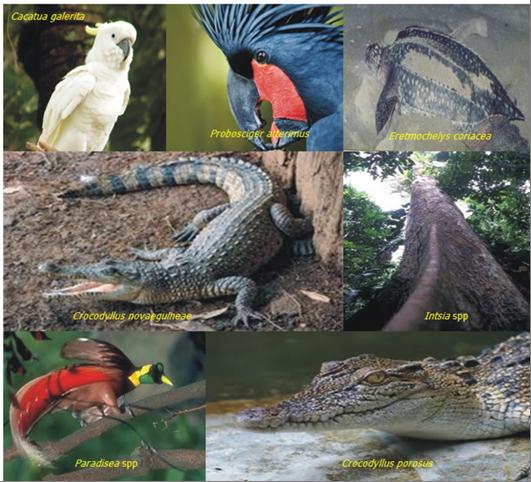 Spesies prioritas untuk ditingkatkan populasinya