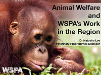 02_International perspective on AW - Natasha Lee WSPA
