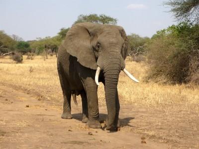 elephant-114543_960_720