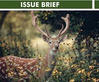 Issue Brief Covid 19 (2)
