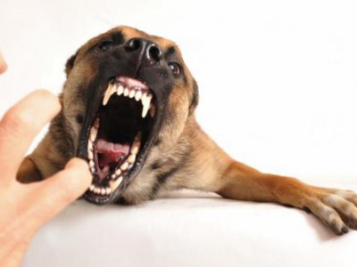 Cara Mengatasi Gigitan Anjing Agar Tidak Berbahaya